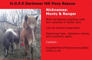 monty and ranger